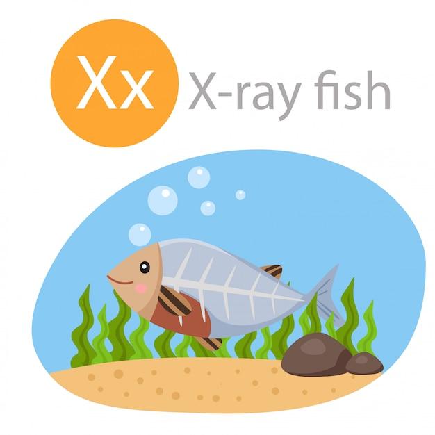 Illustratore di x per animale da pesce a raggi x Vettore Premium