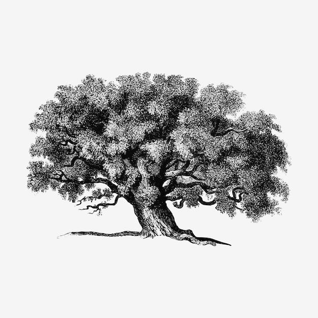 Illustrazione albero d'epoca Vettore gratuito