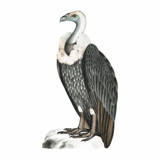 Illustrazione animale vintage Vettore gratuito