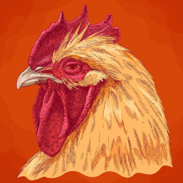 Illustrazione antica incisione della testa del gallo Vettore Premium