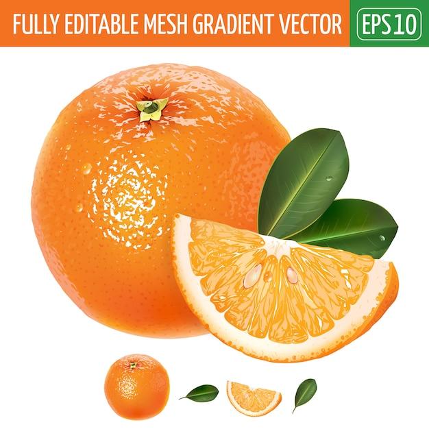 Illustrazione arancione su bianco Vettore Premium