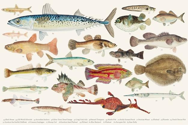 Illustrazione colorata di vettore della collezione di disegno di pesce Vettore gratuito