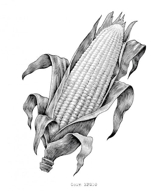 Illustrazione d'annata dell'incisione del disegno della mano del cereale Vettore Premium