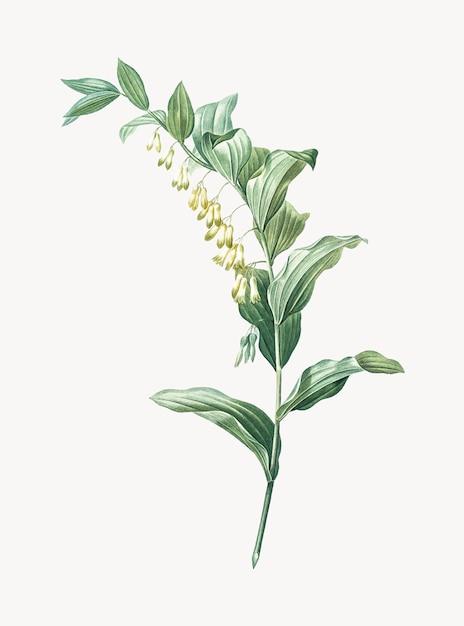 Illustrazione d'epoca del sigillo di salomone Vettore gratuito