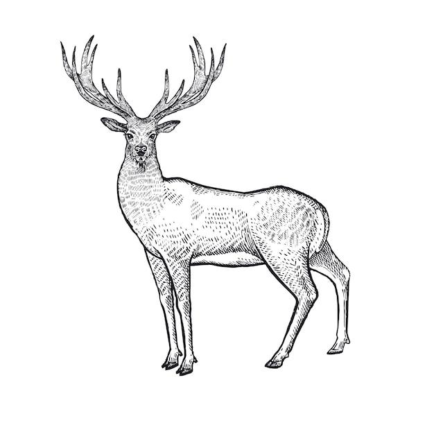 Illustrazione dei cervi degli animali della foresta. Vettore Premium