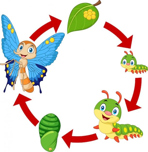 Illustrazione del ciclo di vita della farfalla Vettore Premium