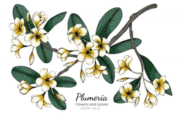 Illustrazione del disegno del fiore e della foglia di plumeria con la linea arte su bianco Vettore Premium