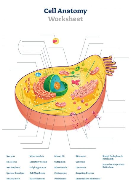 Illustrazione del foglio di lavoro di anatomia cellulare Vettore Premium
