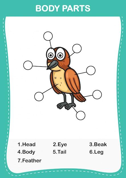 Illustrazione del vocabolario degli uccelli parte del corpo, scrivi i numeri corretti del corpo parts.vector Vettore Premium