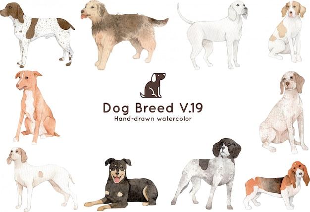 Illustrazione dell'acquerello di razza di cane Vettore Premium