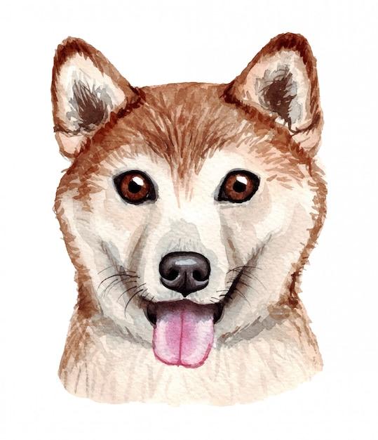 Illustrazione dell'acquerello di un cane divertente. razza popolare. cane. shiba inu. carattere fatto a mano isolato su bianco Vettore Premium