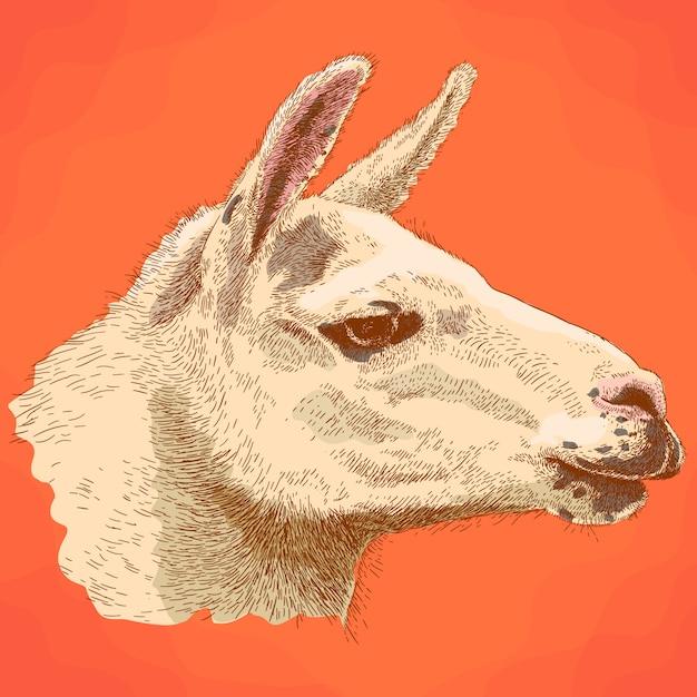 Illustrazione dell'incisione della testa della lama nel retro stile Vettore Premium