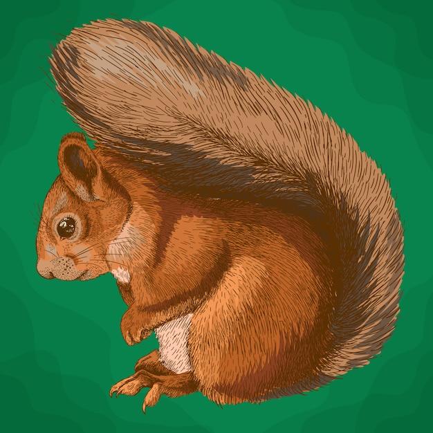 Illustrazione dell'incisione dello scoiattolo Vettore Premium