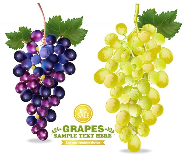 Illustrazione dettagliata dell'uva Vettore Premium