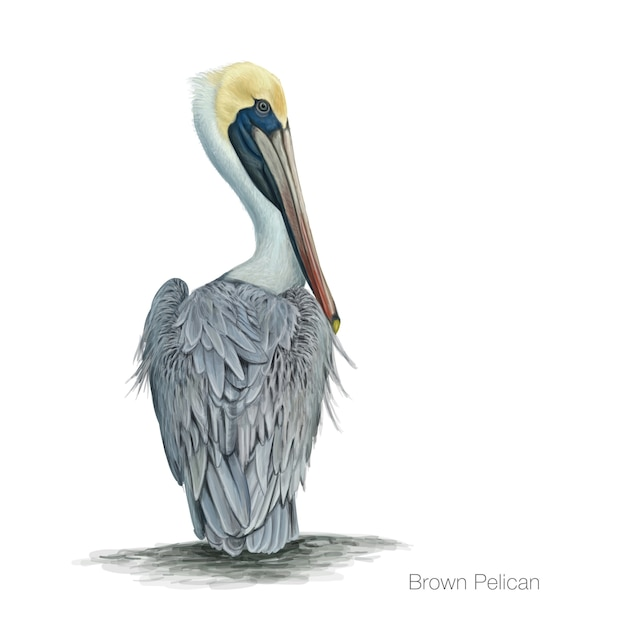 Illustrazione dettagliata pelican marrone Vettore Premium