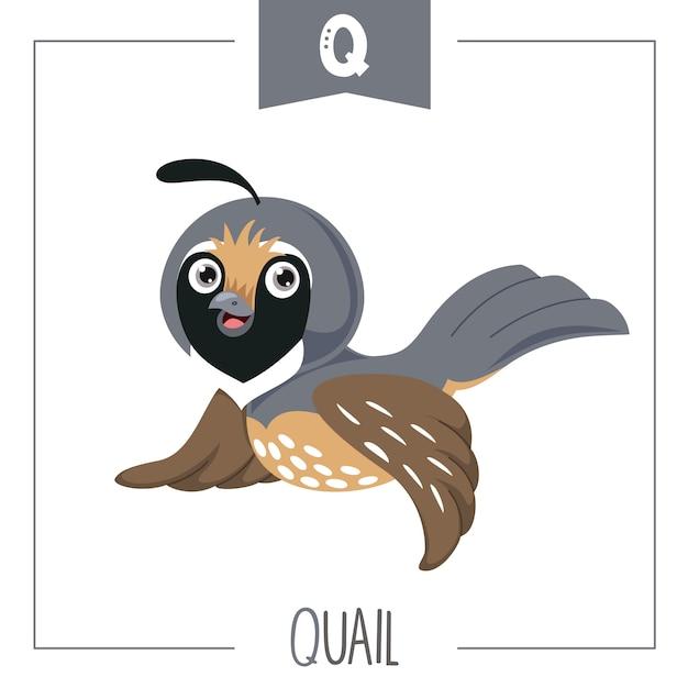 Illustrazione di alfabeto lettera q e quaglia Vettore Premium