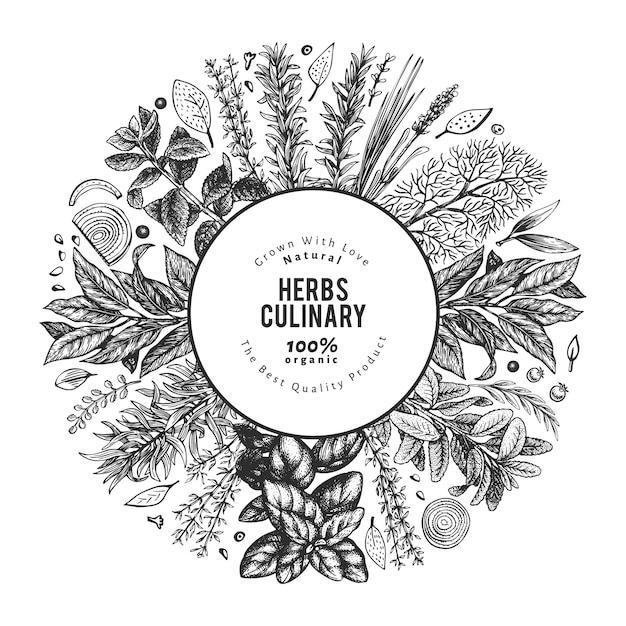 Illustrazione di erbe culinarie. illustrazione botanica vintage disegnata a mano. stile inciso. Vettore Premium