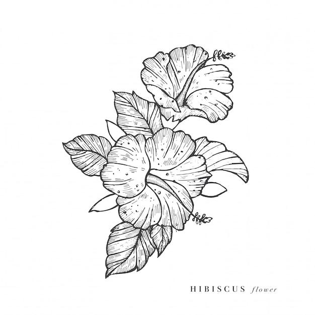 Illustrazione di fiori di ibisco di tiraggio della mano. ghirlanda floreale. carta floreale botanica su sfondo bianco. Vettore Premium