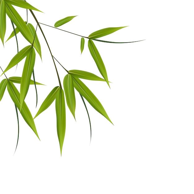 Illustrazione di foglie di bambù. illustrazione con oggetti isolati Vettore Premium