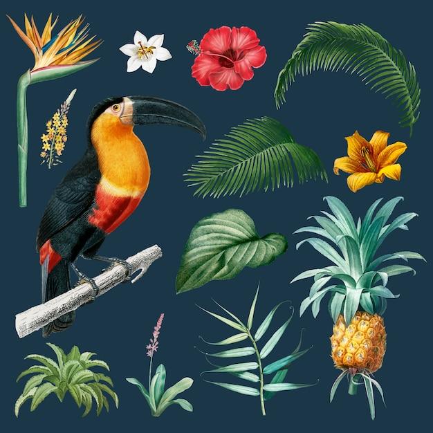 Illustrazione di foglie di macaw Vettore gratuito