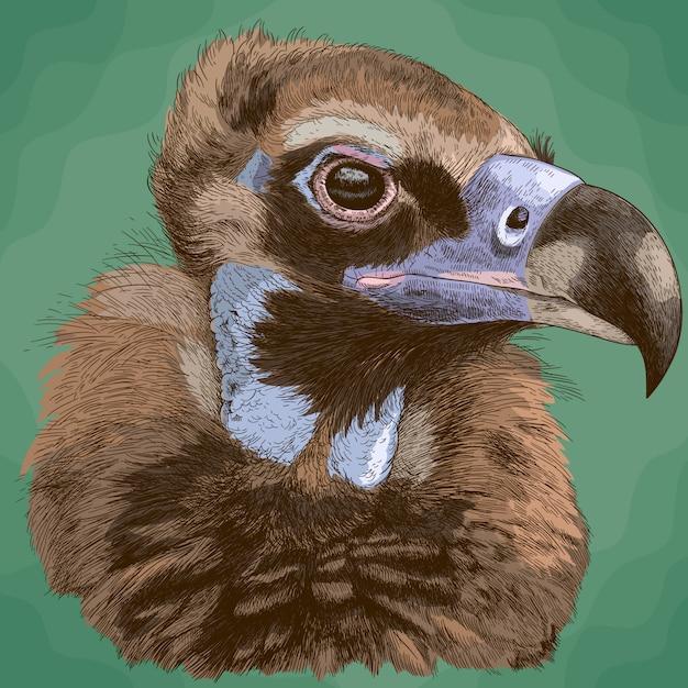 Illustrazione di incisione di avvoltoio cinereo Vettore Premium