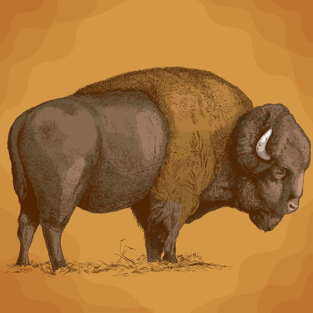 Illustrazione di incisione di bisonte Vettore Premium