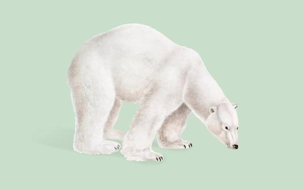 Illustrazione di orso polare Vettore gratuito
