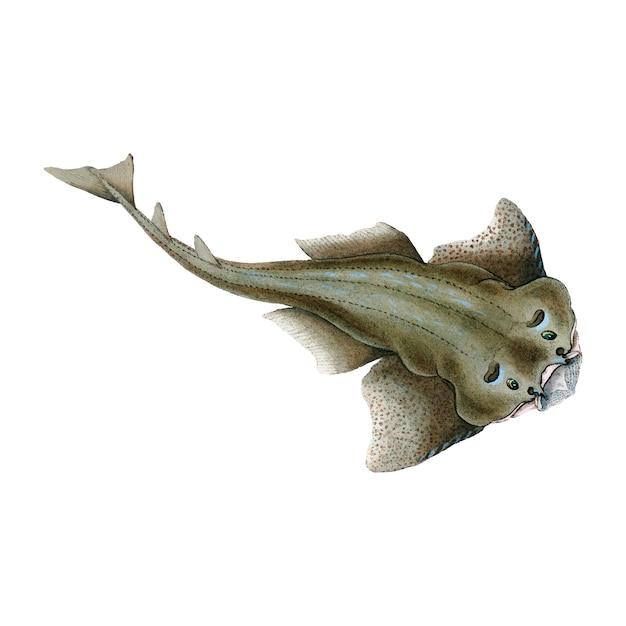 Illustrazione di pesce d'epoca Vettore gratuito