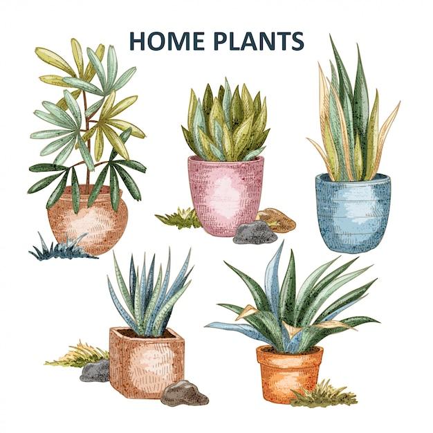 Illustrazione di piante domestiche Vettore Premium