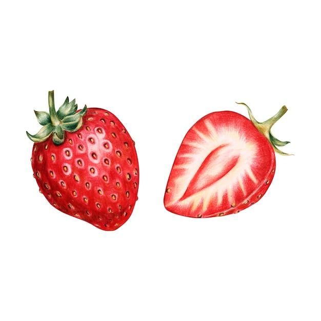 Illustrazione di stile acquerello frutta Vettore gratuito