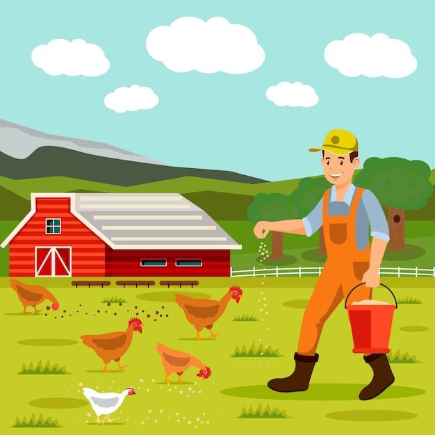 Illustrazione di vettore di alimentazione dei polli dell'allevatore maschio Vettore Premium