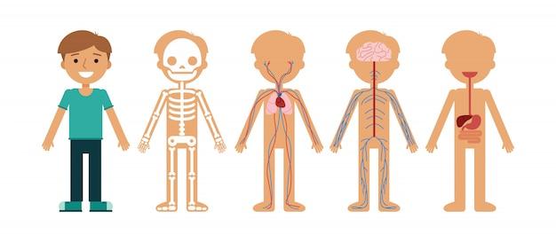 Illustrazione di vettore di anatomia del corpo del ragazzo. Vettore Premium