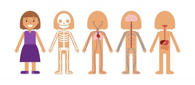 Illustrazione di vettore di anatomia del corpo della ragazza. Vettore Premium