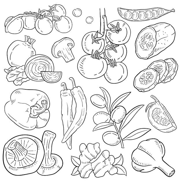 Illustrazione disegnata a mano di verdura. Vettore Premium
