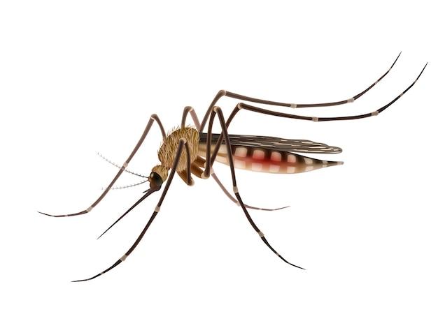 Illustrazione realistica della zanzara Vettore Premium