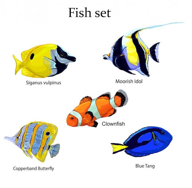 Illustrazione stabilita di vettore del pesce Vettore Premium