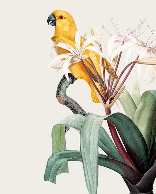 Illustrazione tropicale di ara Vettore gratuito