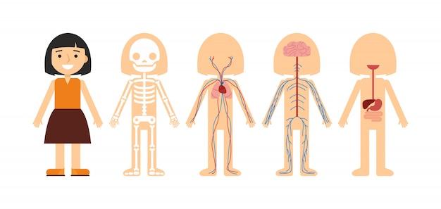 Illustrazione vettoriale di anatomia del corpo Vettore Premium