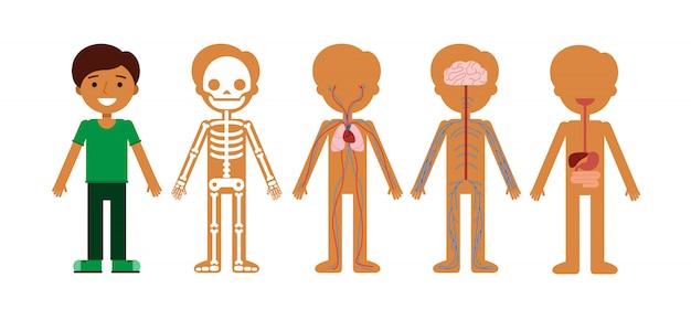 Illustrazione vettoriale di anatomia del corpo. Vettore Premium