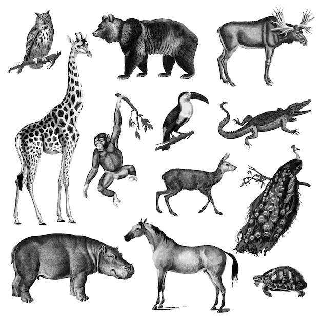 Illustrazioni d'epoca di animali Vettore gratuito
