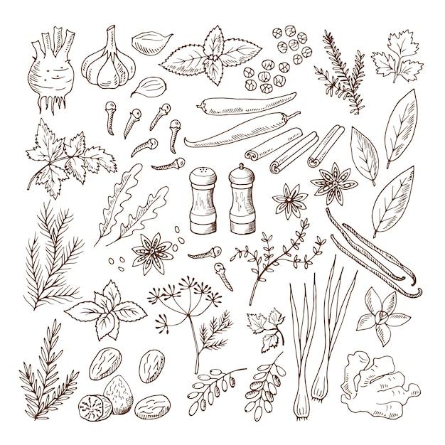 Illustrazioni disegnate a mano di diverse erbe e spezie. le immagini di vettore hanno impostato l'isolato su bianco Vettore Premium