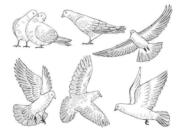 Immagini disegnate a mano di piccioni in diverse pose Vettore Premium