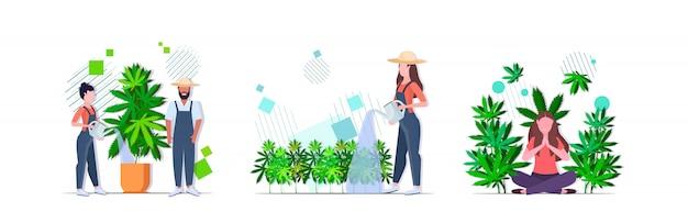 Impostare agricoltori irrigazione ragazza di cannabis godendo dell'effetto narcotico piantagione di canapa industriale coltivazione di marijuana pianta consumo concetti raccolta orizzontale Vettore Premium