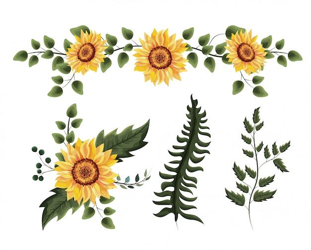 Impostare piante di girasoli esotici con foglie di rami Vettore Premium