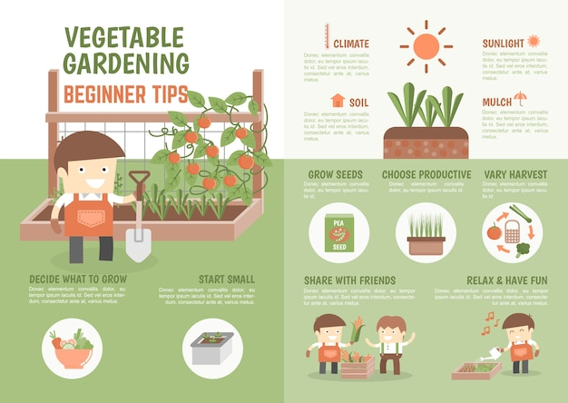 Infografica come coltivare consigli per principianti vegetali Vettore Premium
