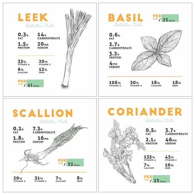 Informazioni nutrizionali su porro, basilico, scalogno e coriandolo. Vettore Premium