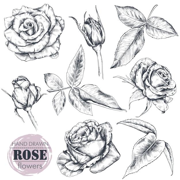 Insieme dei fiori e delle foglie rosa disegnati a mano isolati Vettore Premium