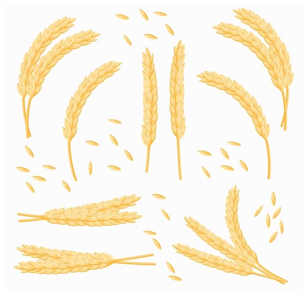 Insieme del mazzo del fumetto di grano, di avena o di orzo isolato. insieme di vettore delle spighe di grano. Vettore Premium