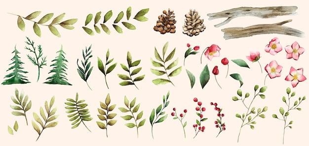 Insieme dell'acquerello del vettore dei fiori e delle foglie di inverno Vettore gratuito