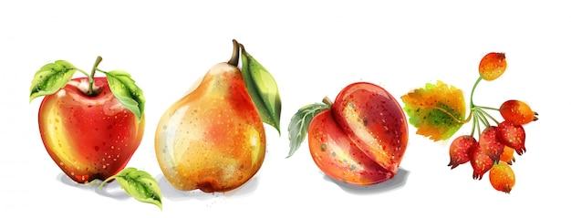 Insieme dell'acquerello di mela, pera e pesca. frutti colorati dettagliati stile dipinto Vettore Premium